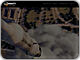 www.pigeonimpossible.com/blog/?p=72